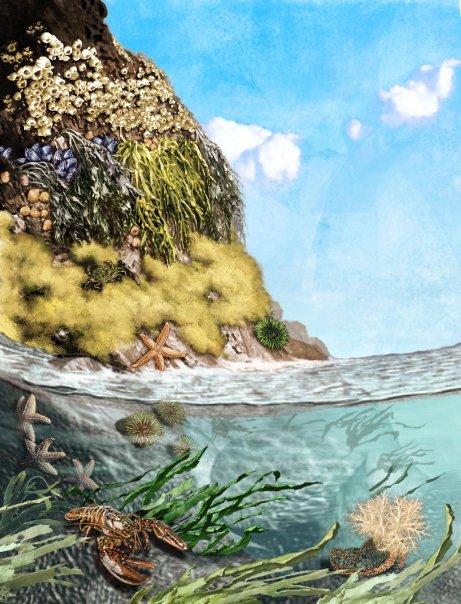 Gary_Freeman-illustration-publishing-Tides