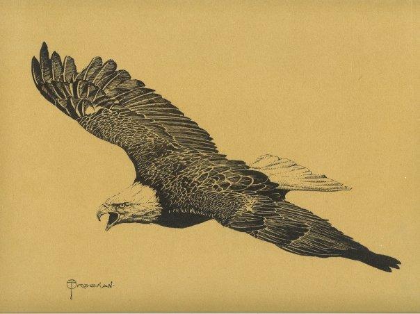 Gary_Freeman_Illustration_Eagle