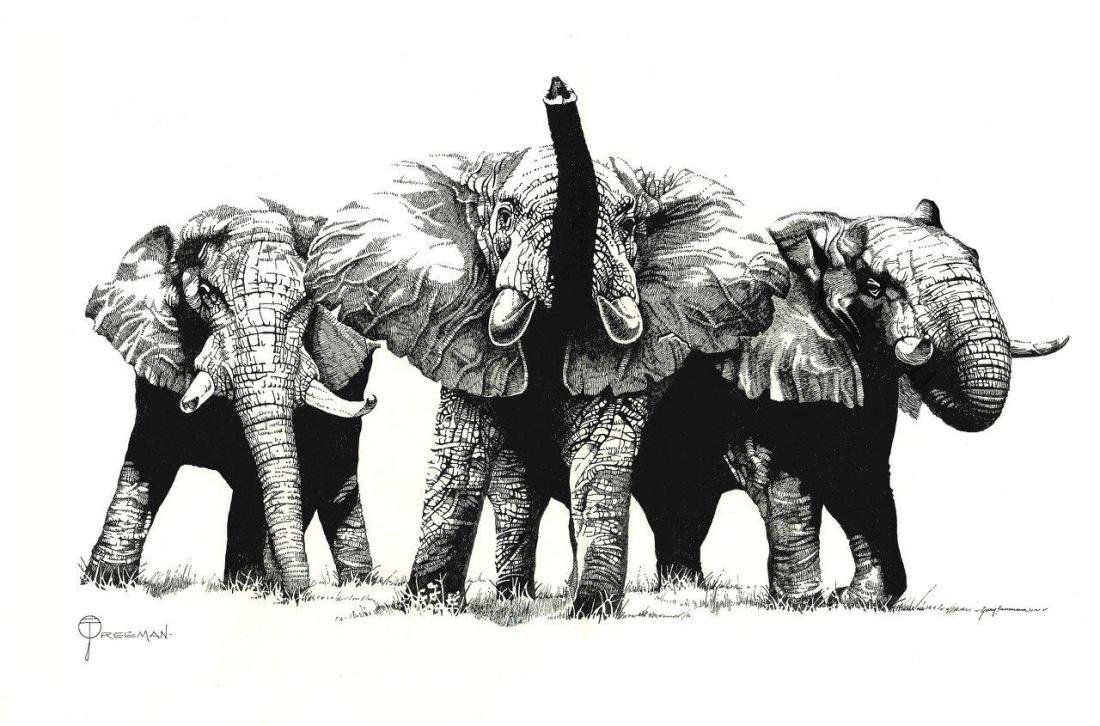 Gary_Freeman_Illustration_elephants2